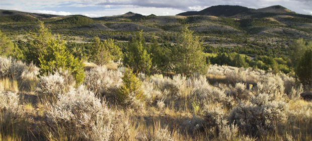 Invasive conifers encroach on sagebrush range