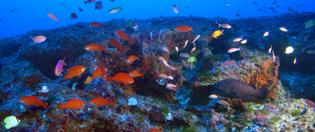 endemic reef fish