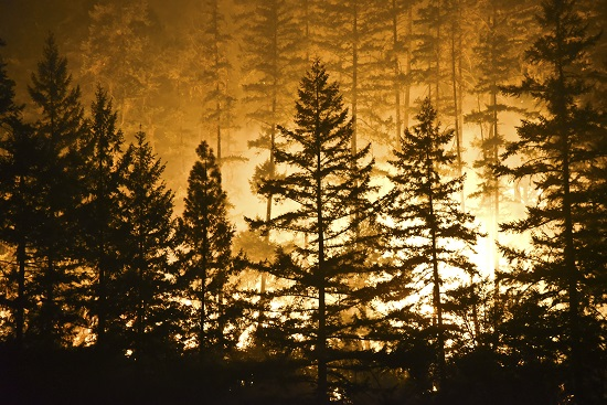 Severe wildfires caused by environmental changes and past forest management practices.