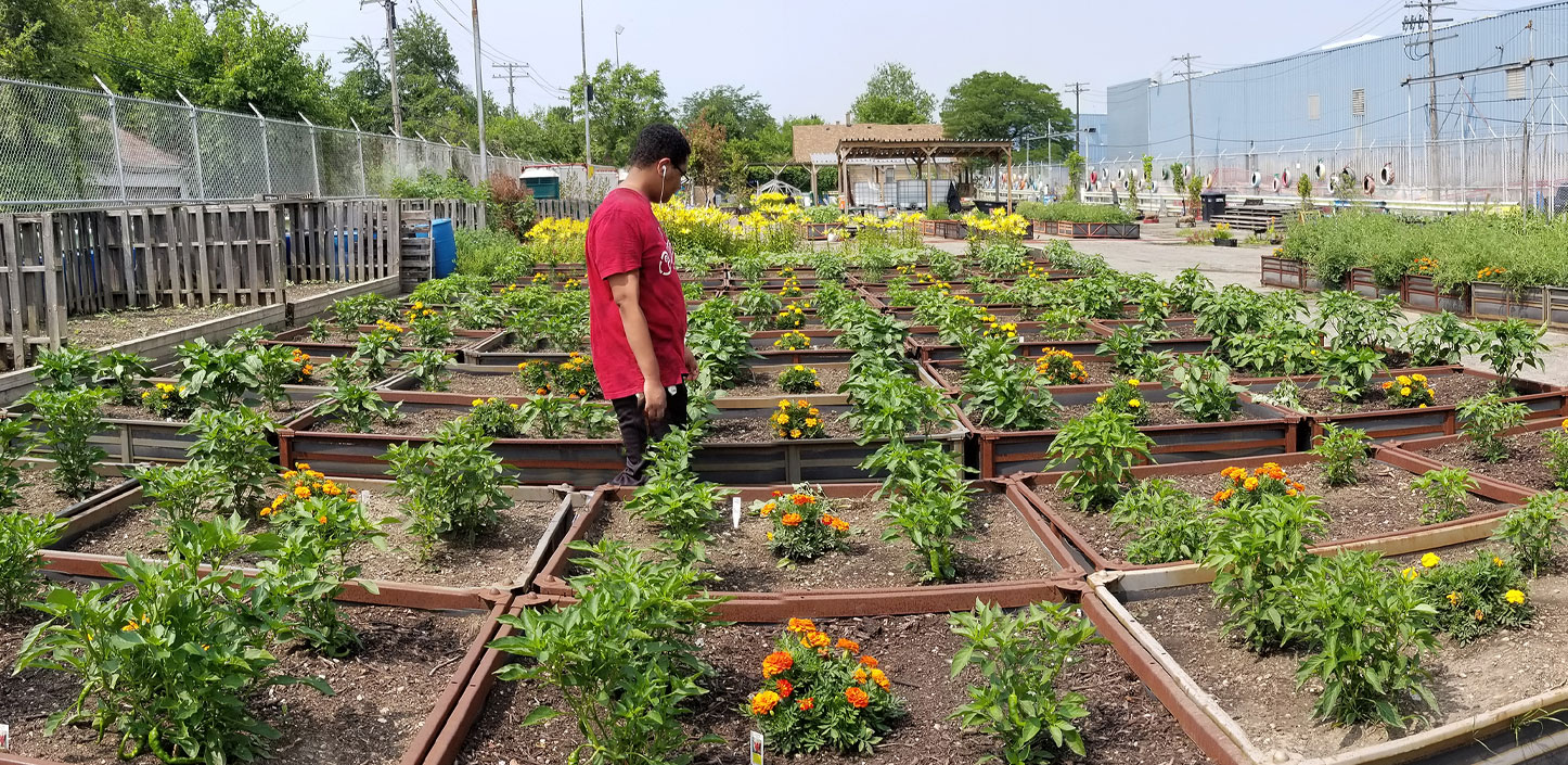 A person standing in a community garden.