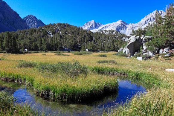 Wet meadow in the Sierra Nevada range