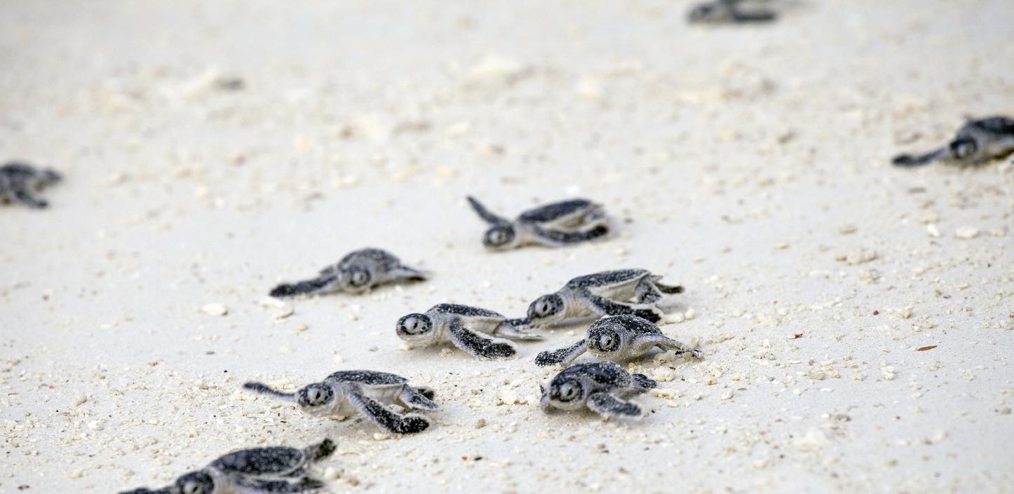 Pop-in Beach All-in-One Large Turtle