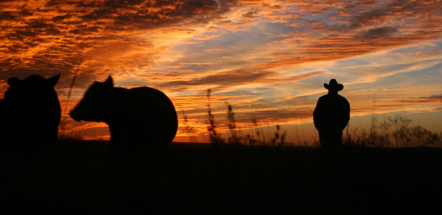 silhouette of cow and cowboy at sunset