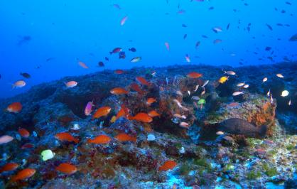 Endemic reef fish at the mesophotic zone in the Northwest Hawaiian Island
