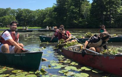 Volunteers remove invasive water chestnut on the Charles River in Boston, Massachusetts