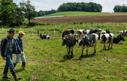 Two men walking in a farm field near several black and white cows