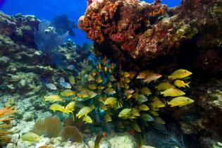 Fish and corals in the Florida Keys