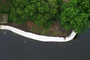 An aerial shot of trees and a shoreline