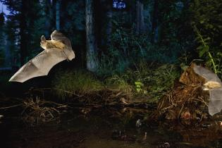 two bats flying in a forest