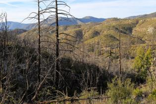 Post-fire landscape in Angeles National Forest