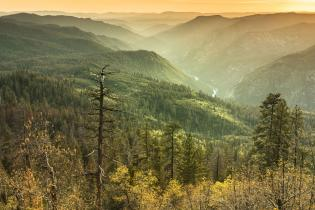Stanislaus National Forest
