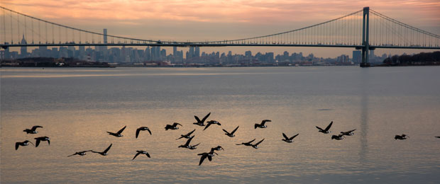 geese flying over the Hudson River