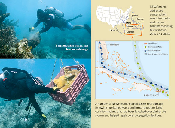 A map of hurricanes Irma and Maria's pathways to Florida and Puerto Rico, and a picture of divers repairing hurricane damage to coral reefs.