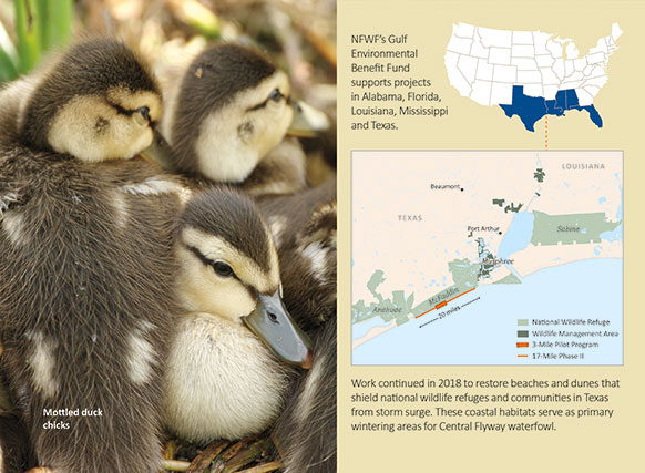 A map of McFaddin Wildlife Reduge in Texas and a picture of mottled duck chicks.